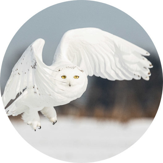 circle-owl1