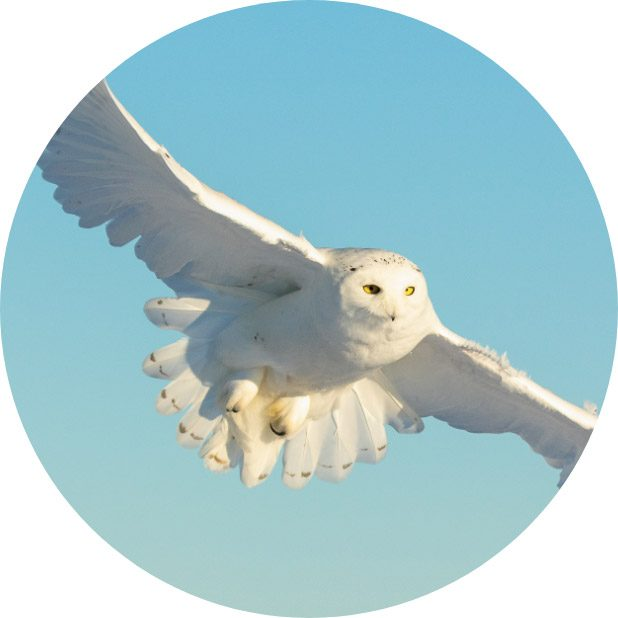 circle-owl2